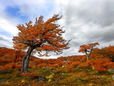 patagonia trees argentina
