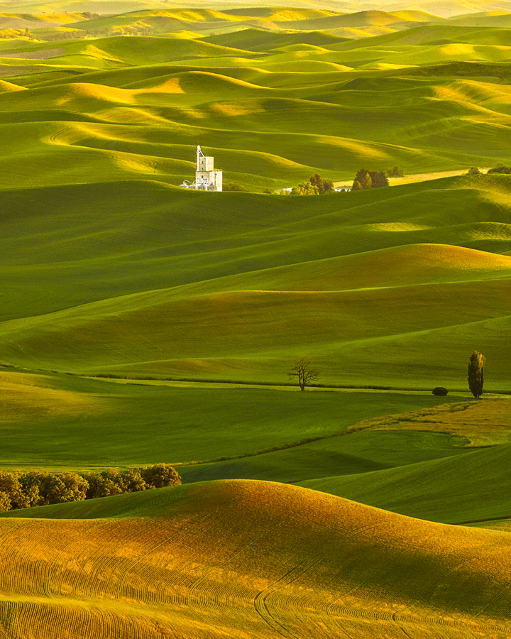 sunset palouse washington wheat fields
