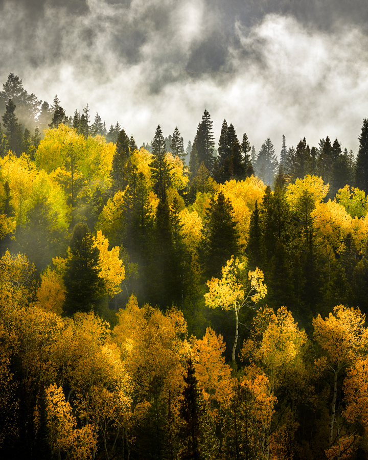 utah autumn trees forest