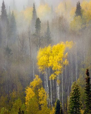 aspen trees fog utah autumn