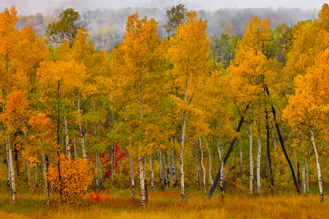aspen grove fall autumn utah