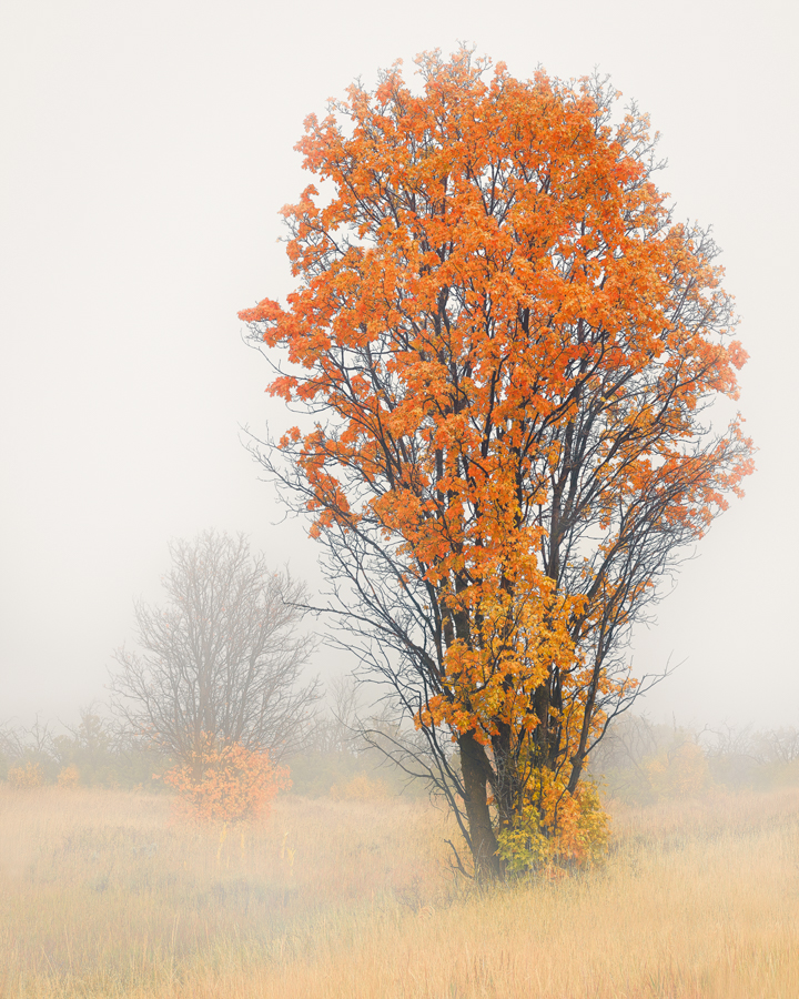 tree fall autumn utah fog