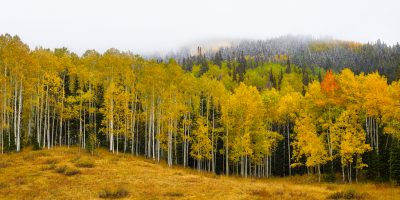 aspen trees utah autumn fall snow