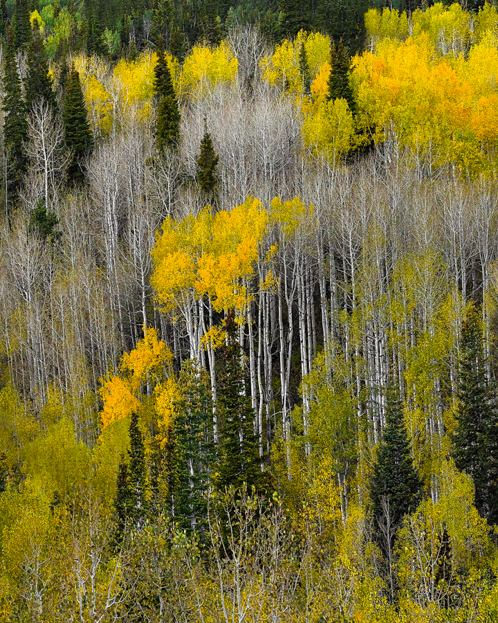 aspen utah autumn trees fall