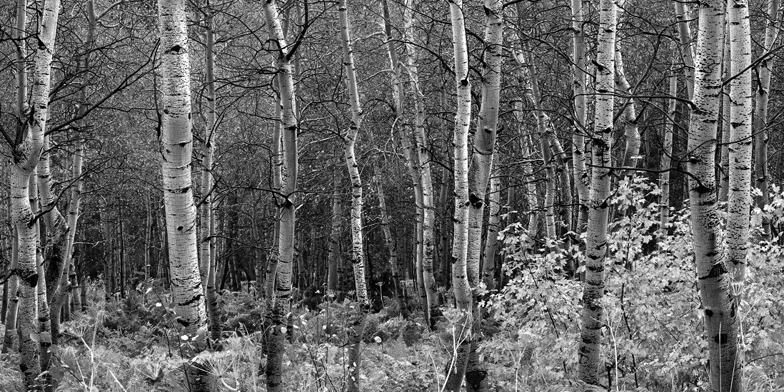 black and white aspen grove utah