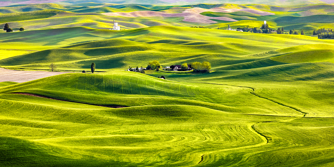 palouse washington wheat fields sunset