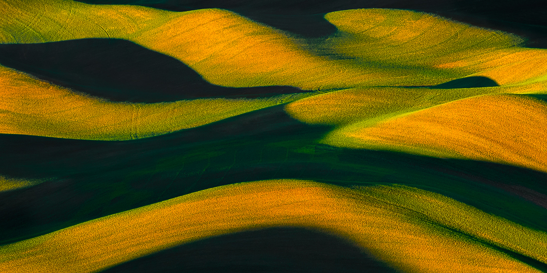 palouse shadows wheat sunrise