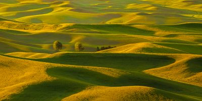 palouse wheat washington fields spring